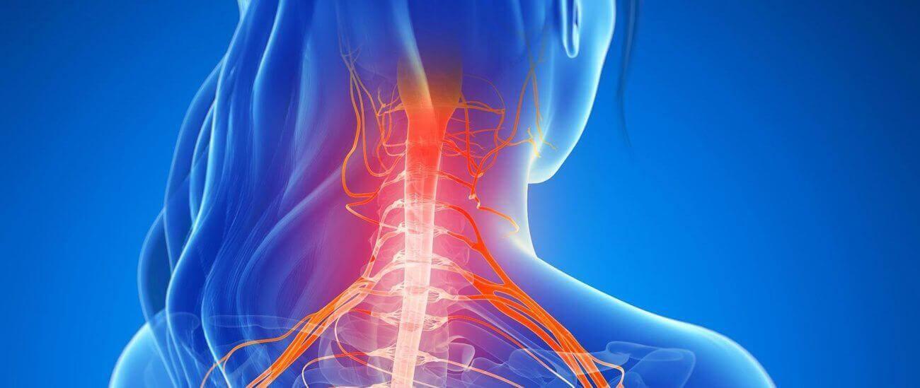 Vertebre Cervicali e Nervi