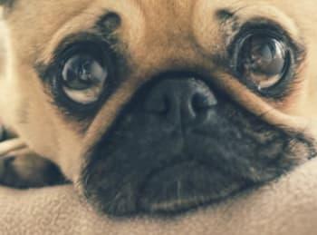 Köpek bakımı uzun ve zorlu bir süreçtir 11