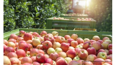 Bild zu Gespritzte Äpfel für ganz Europa
