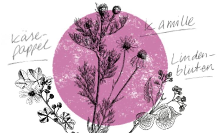 Heilsame Kräuter für die Erkältungszeit | Kräuterkolumne Erkältung Gesundheit Kräuter Kamille Käsepappel lindenblüten