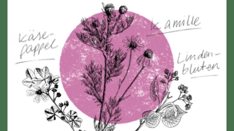 Heilsame Kräuter für die Erkältungszeit | Kräuterkolumne Erkältung Gesundheit Kräuter Wildkräuter