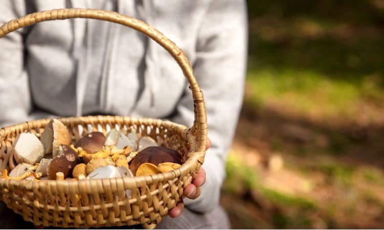 5 Pilzsammeltipps für Anfänger – mit Rezepten | Pilze Rezept