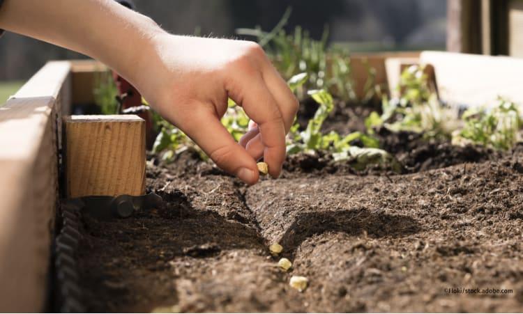 Samenfestes Saatgut: Was Sie wissen müssen | Garten Saatgut