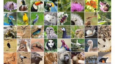 Bild zu Biodiversität einfach erklärt
