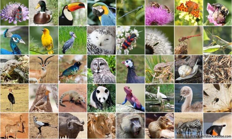 Biodiversität einfach erklärt | Biodiversität Artenvielfalt