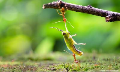Bild zu Klein, aber oho – Warum wir Insekten dringend brauchen