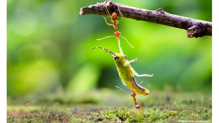 Klein, aber oho – Warum wir Insekten dringend brauchen   Insektensterben Artenvielfalt