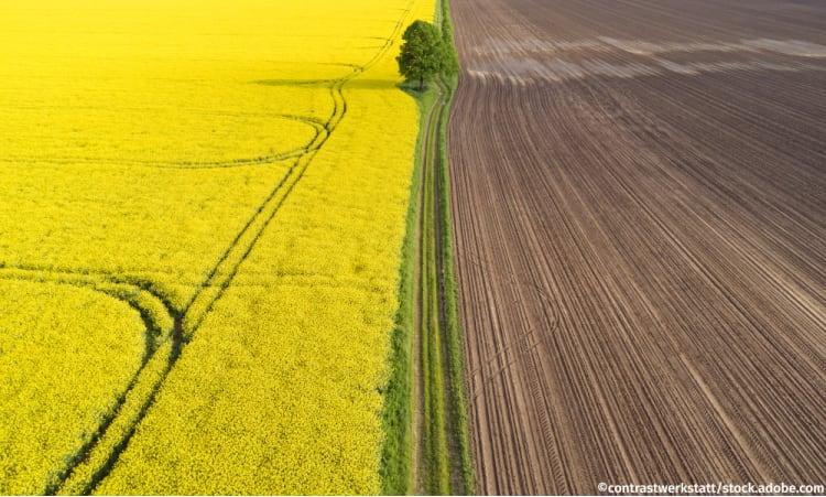 Die Ursachen für das Insektensterben | Landwirtschaft Kulturlandschaft Biodiversität