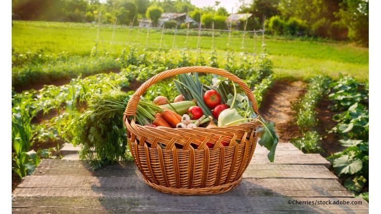 Hundert Prozent Bio weltweit | Biolandbau