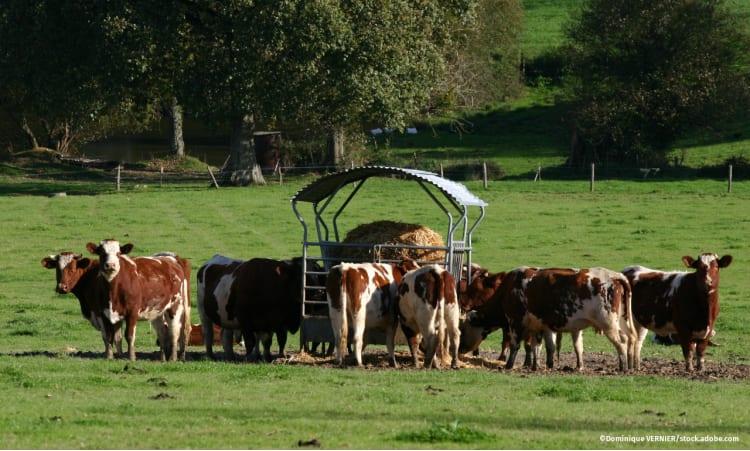 Stressfrei bis zum Schluss | Tierwohl Landwirtschaft