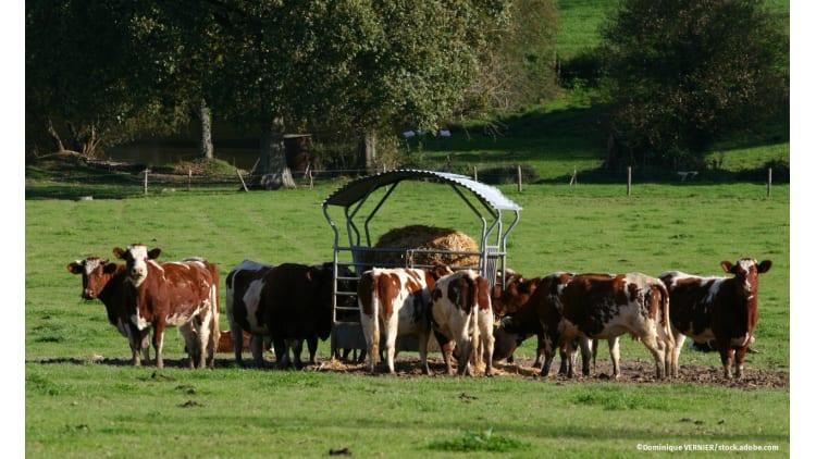 Stressfrei bis zum Schluss   Tierwohl Landwirtschaft