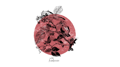 Bild zu Die Kraft der Beeren