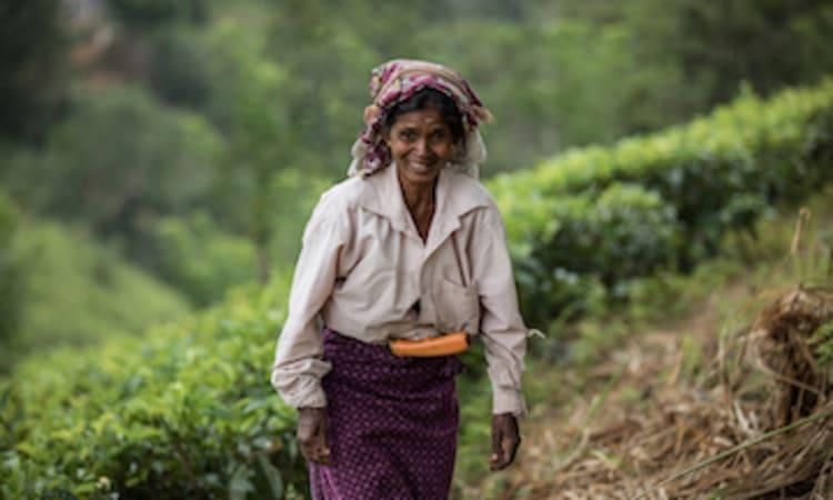 Die Realität auf den Teefeldern Sri Lankas | Entwicklung Globalisierung Ökologischer Pflanzenbau Tee