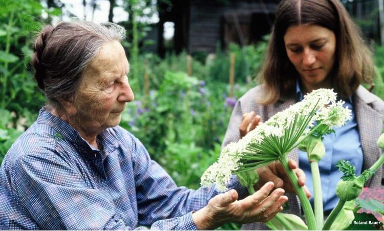 Wie funktioniert Mischkultur? Planung, Abstände, Nachbarn | Garten