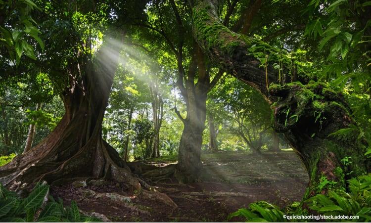 Wundererde aus dem Regenwald   Klimaschutz Boden Regenwald