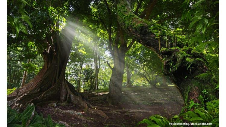 Wundererde aus dem Regenwald | Klimaschutz Boden Regenwald