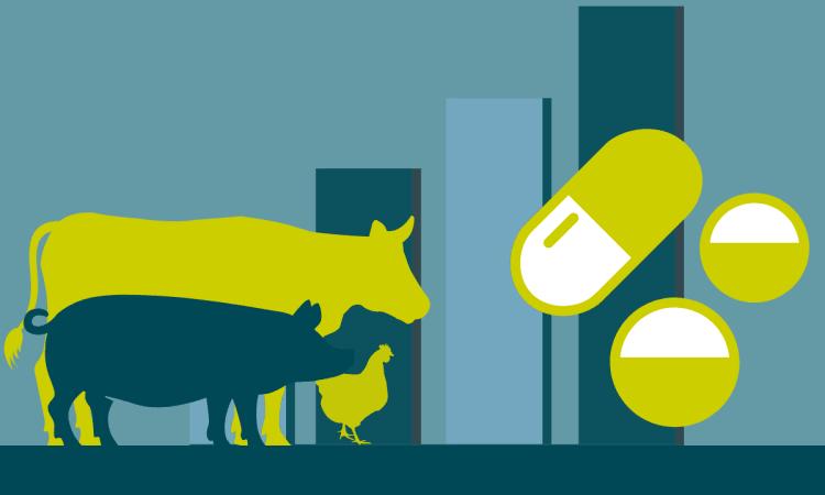 Antibiotika in der Massentierhaltung: Was sagt die Statistik (wirklich)? | Antibiotika Landwirtschaft Tierhaltung ökologische Landwirtschaft