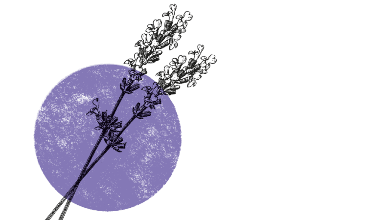 Guter Schlaf mit Kräutern | Kräuterkolumne Schlaf Ätherische Öle Kräuter Lavendel Tee