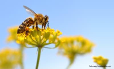 Bild zu »Zum Artensterben muss man nichts mehr erforschen, man muss handeln!«