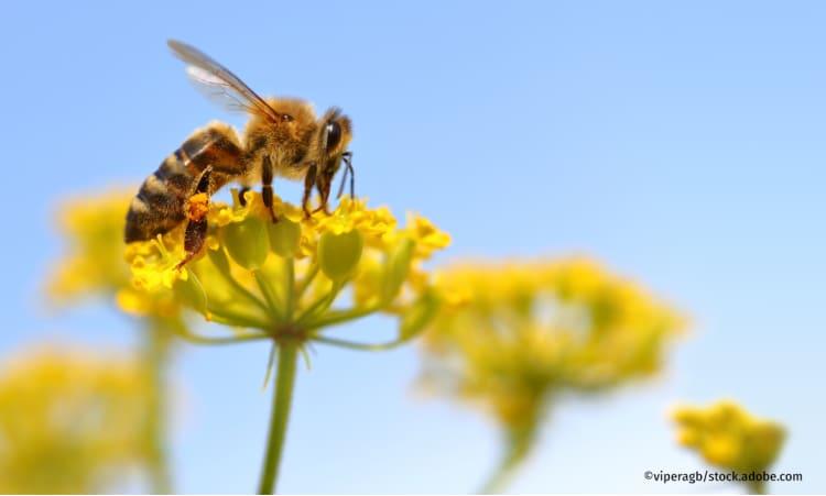 »Zum Artensterben muss man nichts mehr erforschen, man muss handeln!« | Artensterben Biolandbau Landwirtschaft