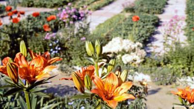 Bild zu Alle Pflanzen leben miteinander und voneinander
