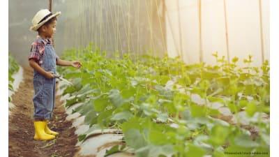 Bild zu Ganzheitliche Landwirtschaft vom Acker bis zum Teller