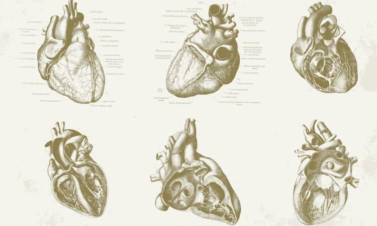 Ein gesünderer Lebensstil hilft Infarkte zu vermeiden   Herz Gesundheit Naturheilkunde