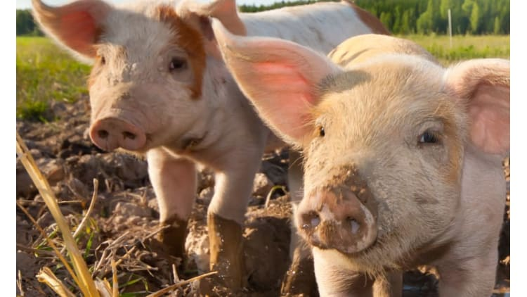 Label für mehr Tierwohl   Tierwohl Fleisch Massentierhaltung Tierschutz Artgerechte Haltung