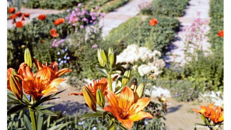 Alle Pflanzen leben miteinander und voneinander | Garten