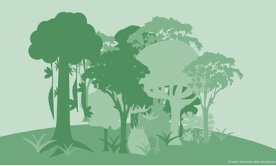 Bild zu Wald schützen: 10 wichtige Maßnahmen gegen die Klimakrise