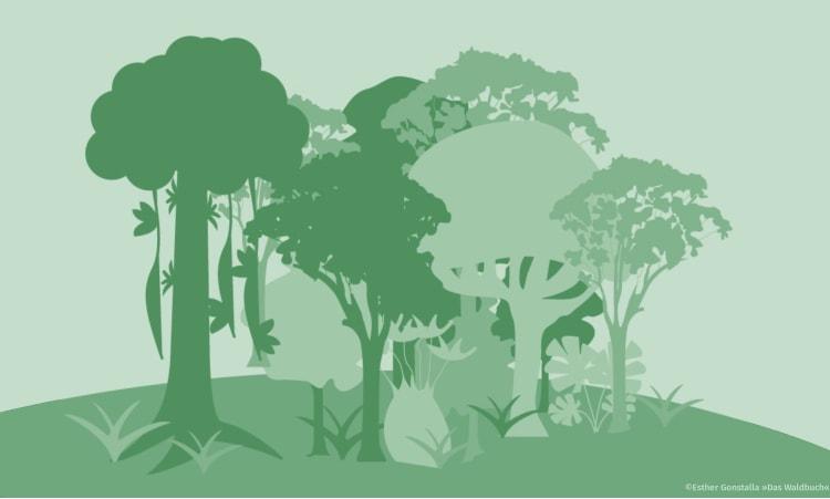 Wald schützen: 10 wichtige Maßnahmen gegen die Klimakrise | Wald Naturschutz Nationalpark