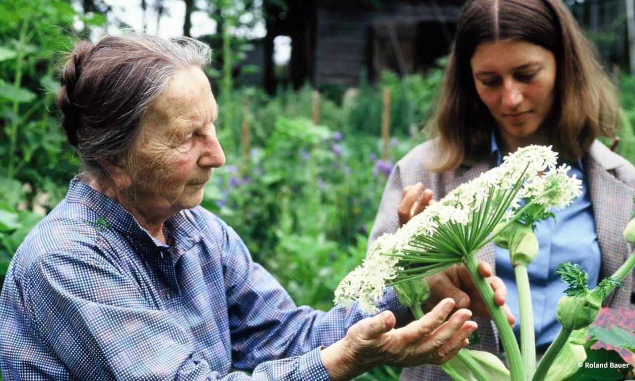 Bild zu Mit einem guten Plan zu gesundem Gemüse