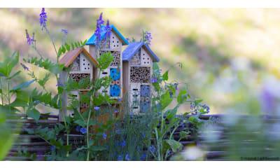Bild zu Gärtnern für Insekten: Von Verstecken und Insektenhotels