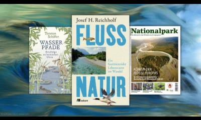 Bild zu Gewässer im Klimawandel: 6 Lesetipps zu Renaturierung, Hochwasserschutz und mehr