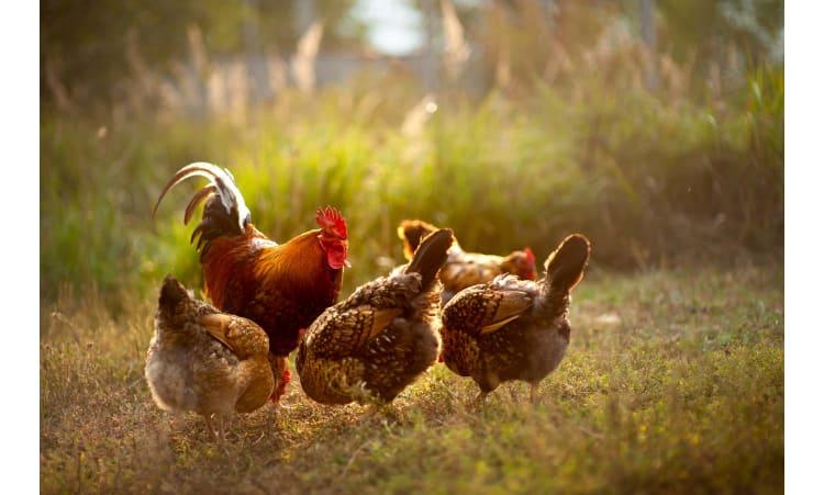 Von Eiern, Gesundheit und Tierwohl   Tierwohl Eier Massentierhaltung Ernährung Ethik