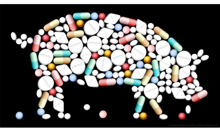 Antibiotika in der Massentierhaltung: Was jetzt getan werden sollte | Massentierhaltung Antibiotika Landwirtschaft ökologische Landwirtschaft Ernährung Gesundheit Medizin Tierwohl