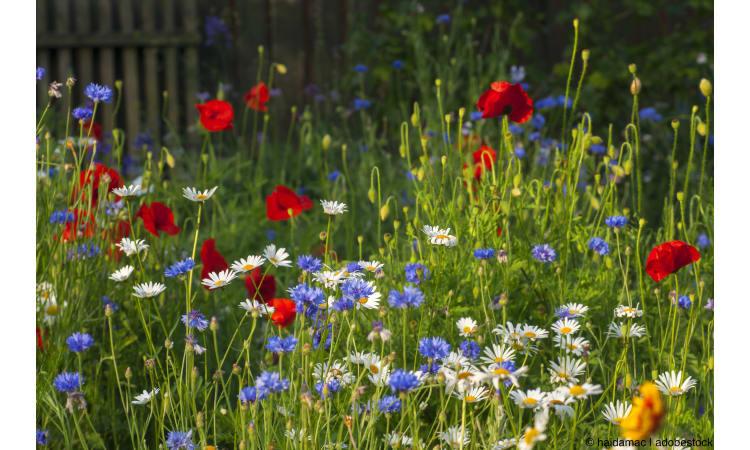 Pflanzen und Blumen für Insekten | Garten Insekten Biodiversität