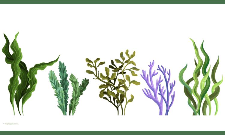 Diese 5 Algenarten solltet Ihr kennen | Algen Nährstoffe Welternährung nachhaltige Ernährung Meere Ernährung Naturwissen