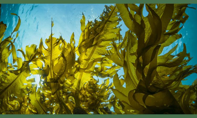 Wie gesund sind Algen? | Algen Nährstoffe Welternährung Ernährung Gesundheit Medizin Nahrungsergänzung Detox