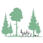 Grafik: vielfältiger und klimafreundlicher Wald