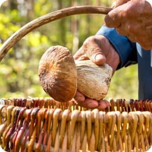 Bild: Am Wegesrand kann man bei einer Wanderung Pilze sammeln