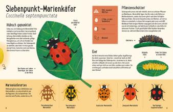 Innenansicht Doppelseite mit farbiger Illustration verschiedener Marienkäferarten