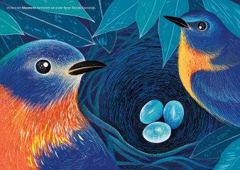 Innenansicht Doppelseite mit farbiger Illustration von Vögeln und Eiern im Nest