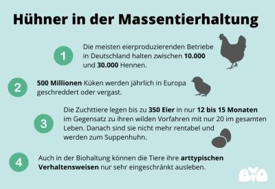 Hühnerhaltung in Deutschland: schlimme Fakten aus der Massentierhaltung
