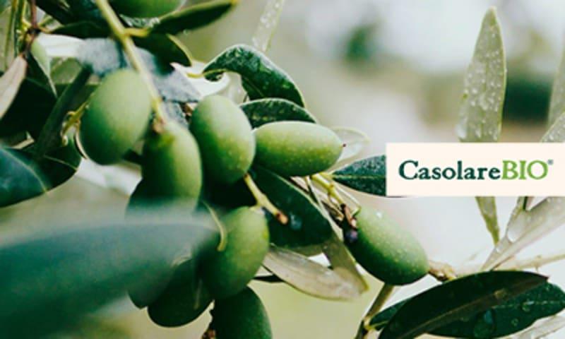 Oliven am Zweig CasolareBIO