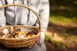 5 Pilzsammeltipps für Anfänger – mit Rezepten