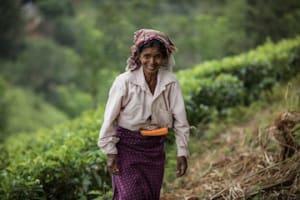 Die Realität auf den Teefeldern Sri Lankas