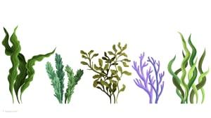 Diese 5 Algenarten solltet Ihr kennen
