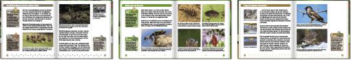 Reihe Schauen und Wissen | Hase und Igel Verlag