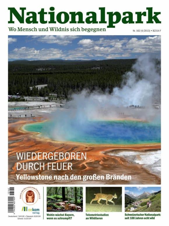 Cover: Wiedergeboren durch Feuer